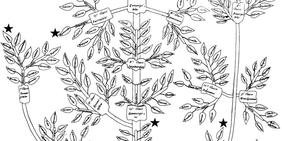 Augier Tree